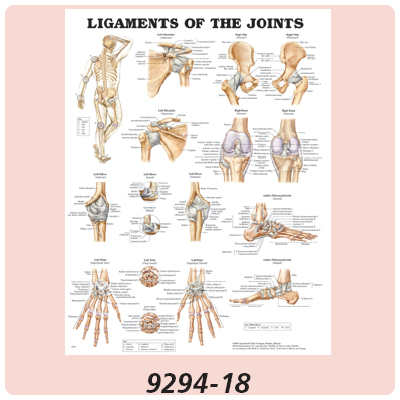 Anatomical Charts - Disease, Human Spine Disorder Chart - Model 550812