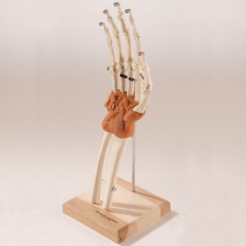 Ultra-Flex Ligamented Hand and Wrist Ultra-Flex Ligamented Hand andWrist - Model 563595