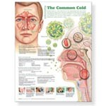Understanding the Common Cold Chart, Each