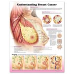 Understanding Breast Cancer Chart, Each
